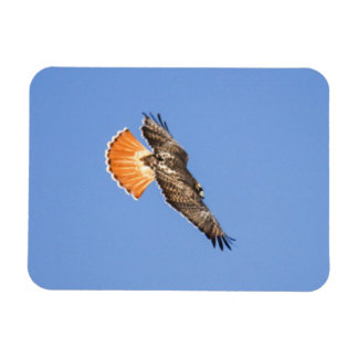 Red-tailed Hawk Rectangular Photo Magnet