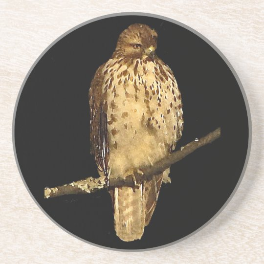 Red Tailed Hawk Sandstone Coaster