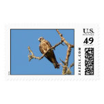 Red Tailed Hawk Stamp