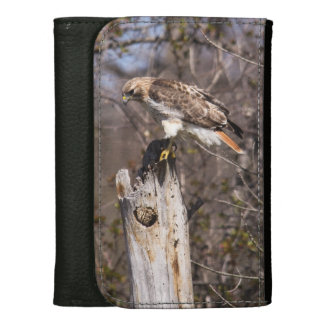 Red-tailed Hawk Wallet