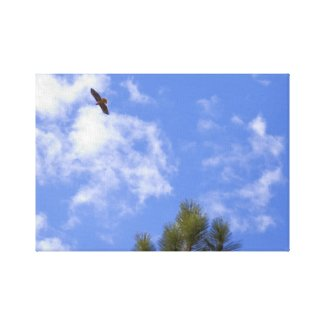 Red Tailed Hawk Wrapped Canvas wrappedcanvas