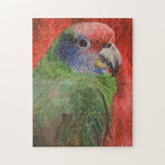 Red-tailed Parrot Puzzle