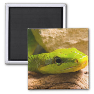 Red Tailed Racer Refrigerator Magnet