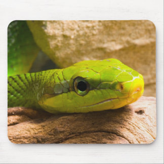 Red Tailed Racer Mouse Pad