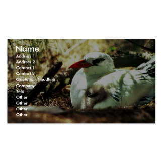 Red-tailed Tropicbird and Chick Business Cards