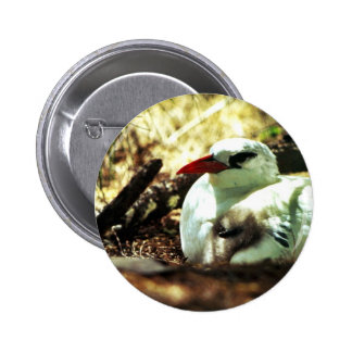 Red-tailed Tropicbird and Chick Pinback Buttons