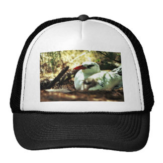 Red-tailed Tropicbird and Chick Trucker Hat
