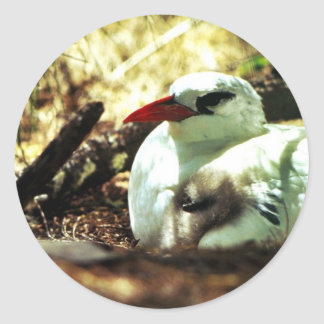 Red-tailed Tropicbird and Chick Sticker