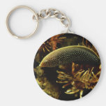 Red-tailed Wrasse Keychain