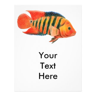 Red Terror Cichlid Fish Flyer