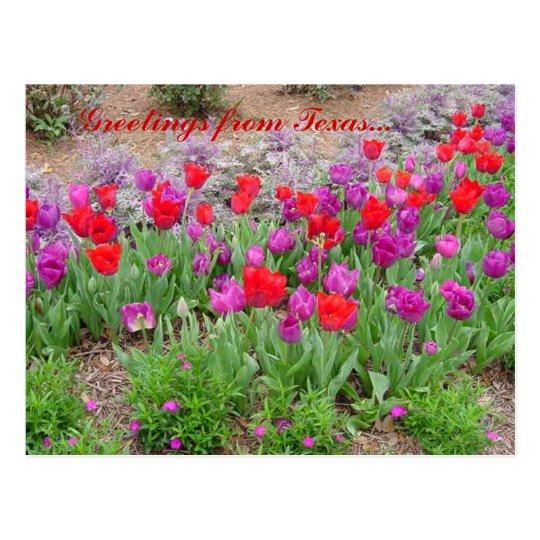 RED TeXaS Greetings Postcard