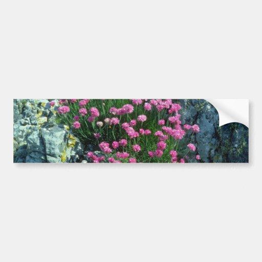 Red Thrift flowers Car Bumper Sticker