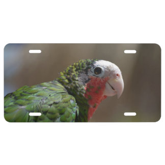 Red Throated Conure License Plate