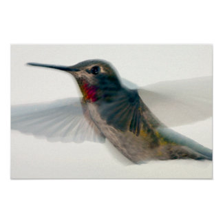 Red-Throated Hummingbird Poster