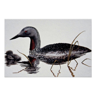 Red-throated loon posters