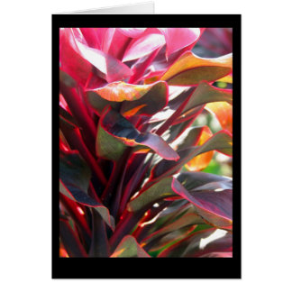 Red Ti Leaves Card