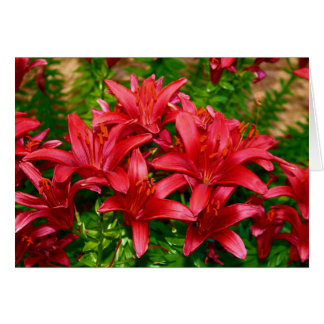 Red Tiger Lilies Card