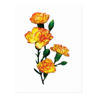 Red-Tipped Yellow Carnations Postcard