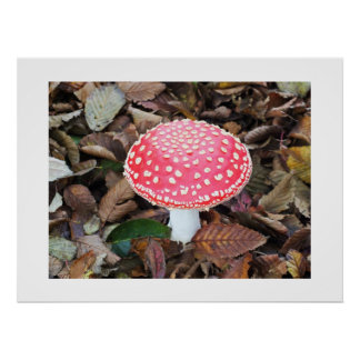 Red toadstool, Amanita muscaria Poster