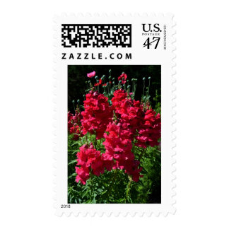 Red Tones of Snapdragons Stamp