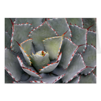 Red-toothed agave card