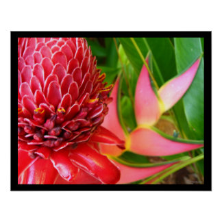 Red Torch Ginger Heliconia Flowers Posters
