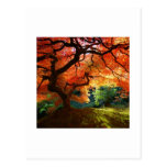 Red Tree Post Card