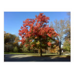 Red Tree Post Cards
