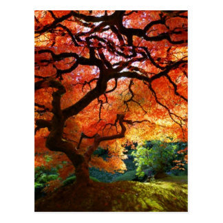 Red Tree Postcard