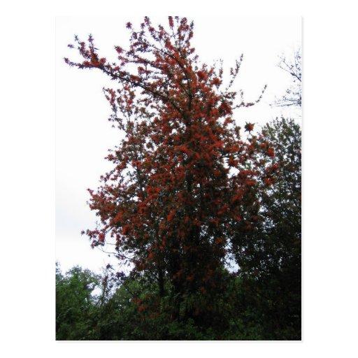 Red Tree Postcards