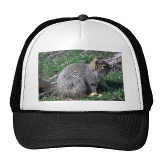 Red Tree Squirrel Hats