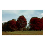 Red Trees in Motion Print