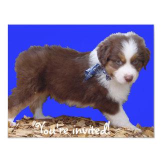 Red Tri Aussie Puppy Card