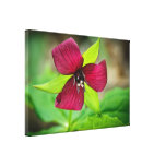 Red Trillium Wildflower Photography Canvas Gallery Wrapped Canvas