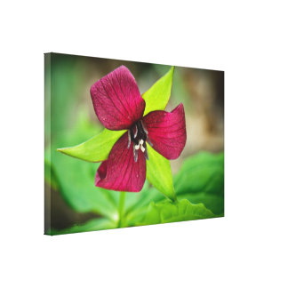 Red Trillium Wildflower Photography Canvas