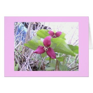 Red Trilliums Card