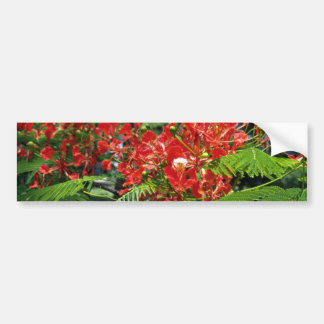 Red Tropical Flowers flowers Bumper Stickers