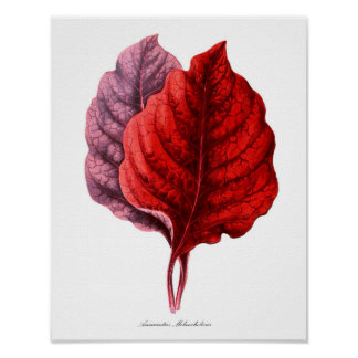 Red Tropical Leaf print #6 Home Decor Wall Art