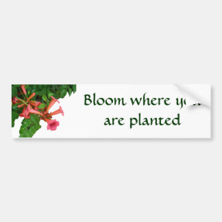 Red Trumpet Vine Bumper Sticker