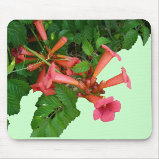 Red Trumpet Vine Mouse Pad