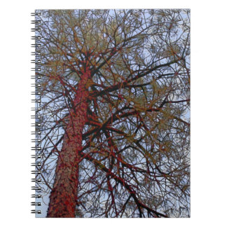 Red Trunk Pine Note Book