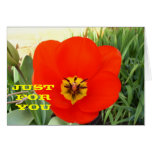 Red Tulip any occasion greeting card
