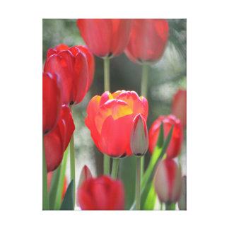 "Red Tulip Canvas 24"" x 32"""
