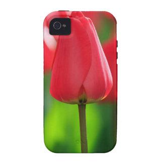 Red Tulip iPhone 4/4S Cases