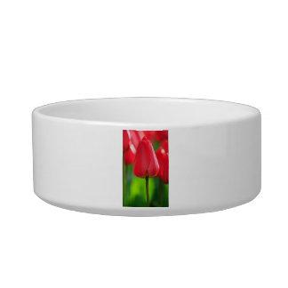 Red Tulip Cat Food Bowl