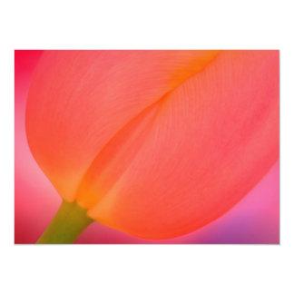 Red Tulip Close-up Card
