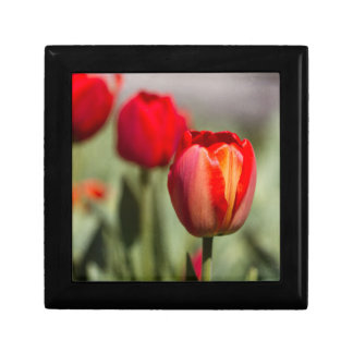 Red Tulip Dual Texture Gift Box