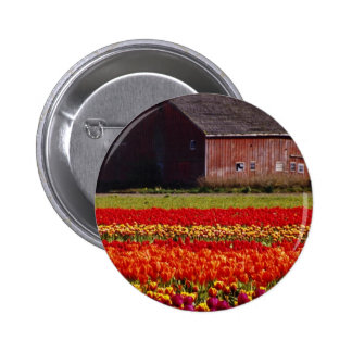 Red Tulip farm, Mt. Vernon, Washington flowers Pinback Buttons
