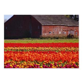 "Red Tulip farm, Mt. Vernon, Washington flowers 5"" X 7"" Invitation Card"