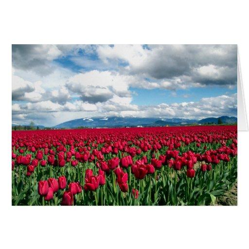 Red Tulip Field Card